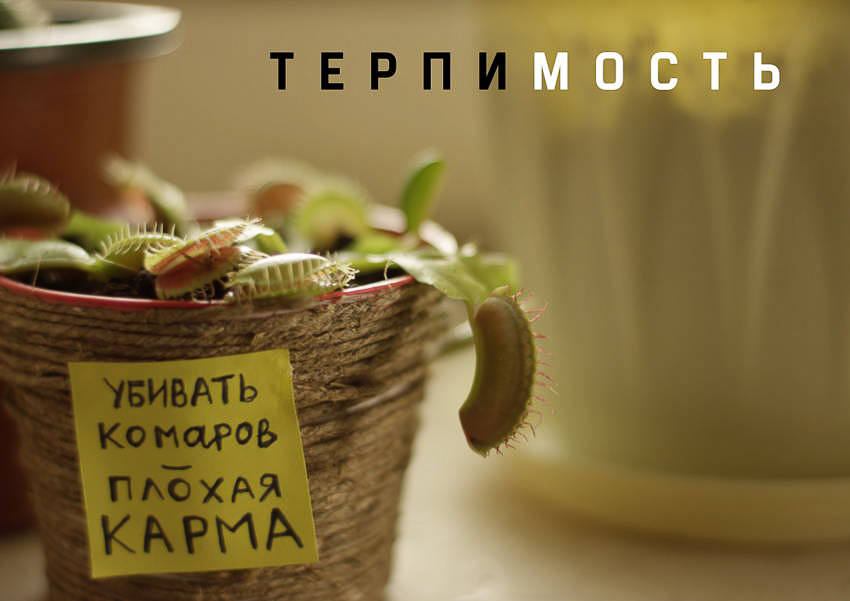 Выжить в офисе, коммуналке и не только - премьерный показ фильмов молодых петербуржских режиссеров