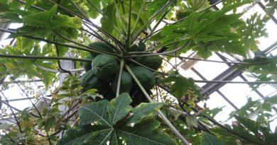 экскурсии посвященные растениям-афродизиакам