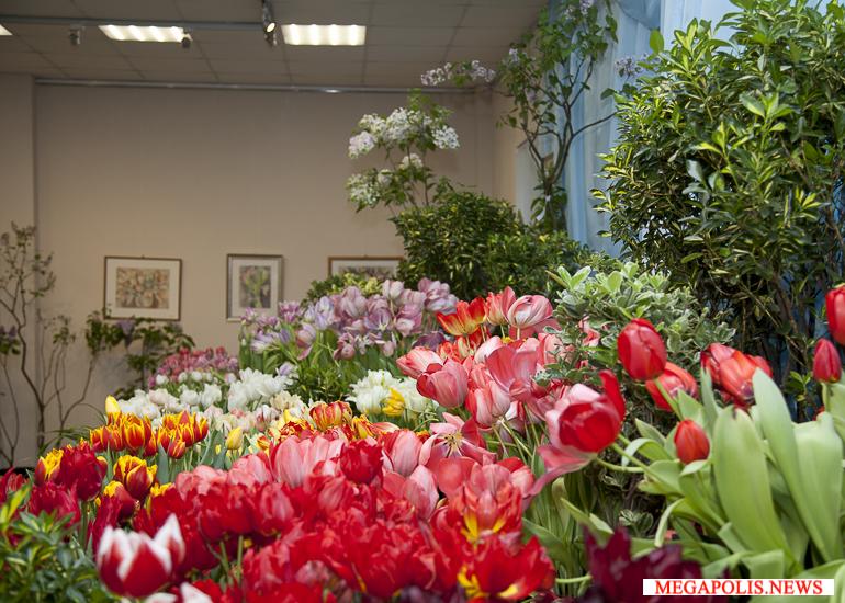 Выставки тюльпанов в ботанических садах двух столиц