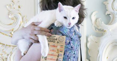кот Ахилл - эрмитажный оракул ЧМ2018