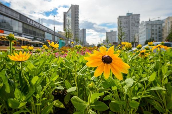 Москвичи выберут сады, которые они хотят увидеть в своих районах
