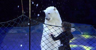 Премьера цирковой программы Цирк на льду в Петербурге