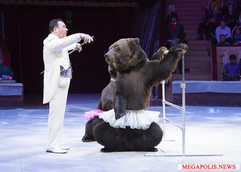 Приключения знаменитого итальянца в цирке на Фонтанке
