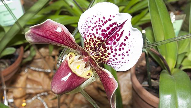 выставка орхидей 2018