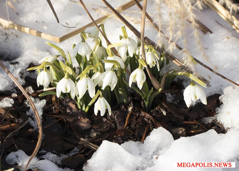 Фестиваль «Мечты о весне» в Ботаническом саду Петербурга