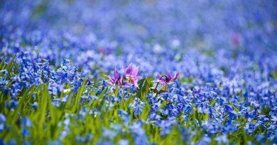 Тайны весеннего королевства покажут в Ботаническом саду