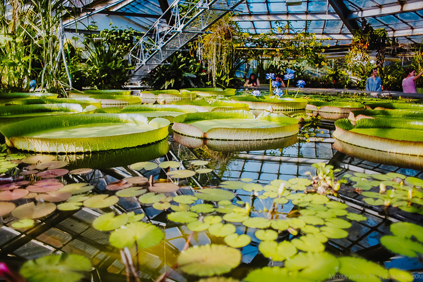 Фестиваль «Иммигранты Нового света» в Ботаническом саду