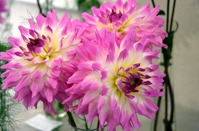 Фестиваль «Краски лета» пройдет в Ботаническом саду