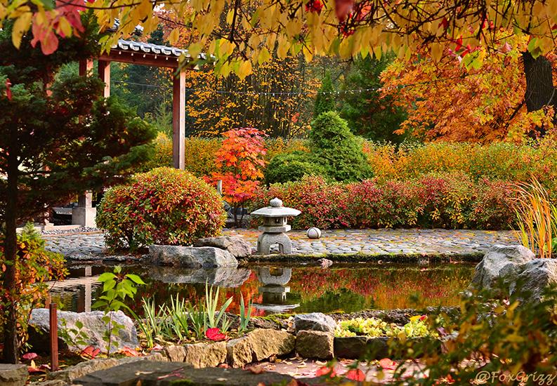 Фестиваль клена в Ботаническом саду