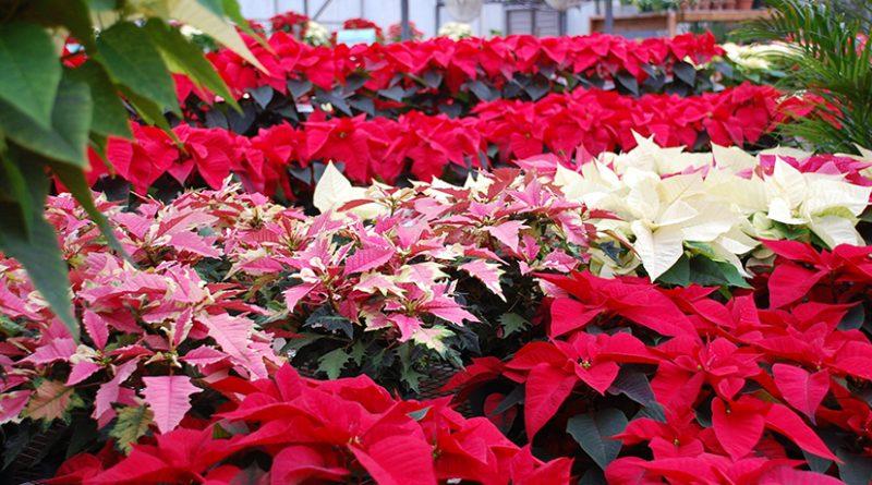 Новогодний райский сад в «Аптекарском огороде»