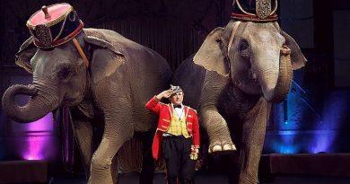 Итальянский цирк Togni выступит в Петербурге