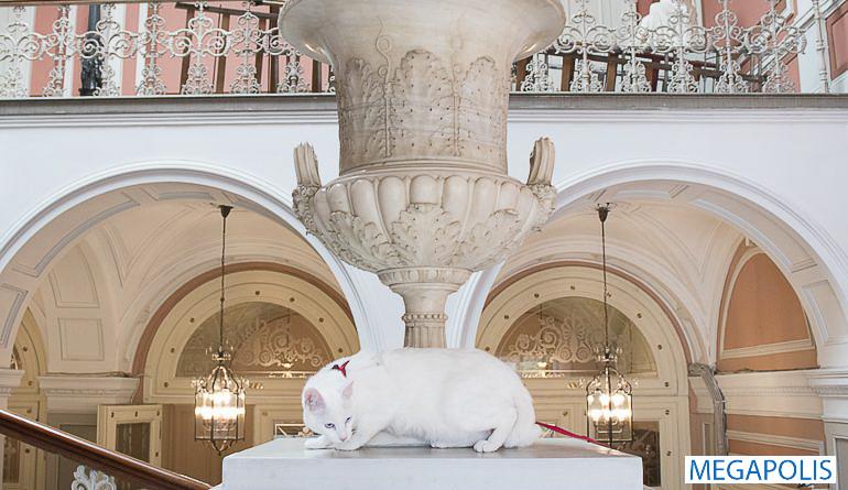 Французский гражданин завещал часть своего наследства котам Эрмитажа